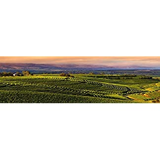 Mitolo-Wines-Jester-ShirazSyrah-McLaren-Vale-2014-Rotwein-1-x-075-l