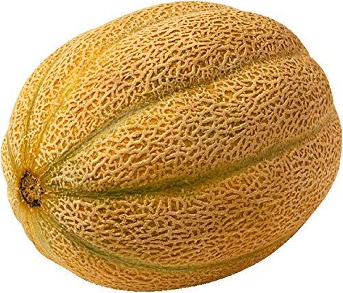 AGROBITS-200-Plus-Honig-Felsen-Cantaloupe-Seed-Garden-Seed