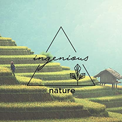 ingenious-nature-Bio-Matcha-Tee
