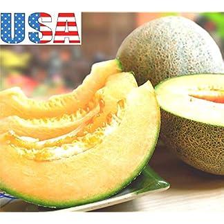 PLAT-FIRM-UA-eller-Honig-Cantaloupe-50-400-Samen-Erbstck-Non-GMO