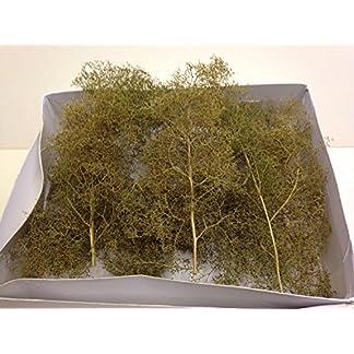 WWS-Mittlerer-Seafoam-Seeschaum-Baum