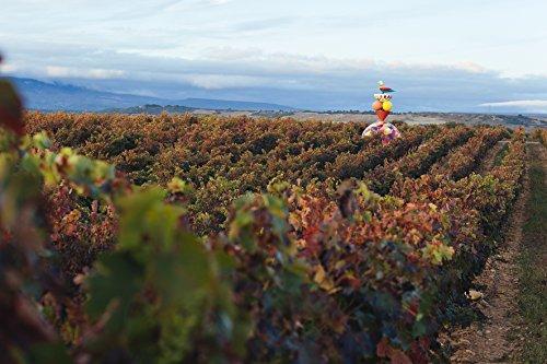 Campo-Viejo-Tempranillo-Ros-Wein-Frischer-Ros-mit-zart-fruchtigem-Geschmack-aus-Spanien-Weinbox-Set-6-x-075-L