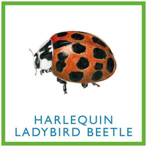 Bug-Bingo