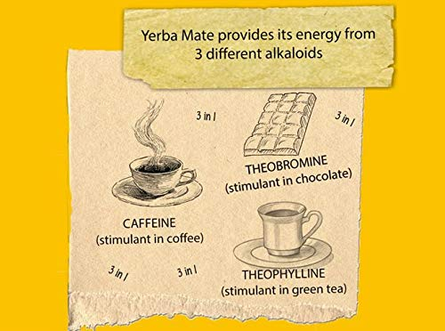 Yerba-Mate-Green-Guayusa-Brasilianischer-Mate-Tee-1000g-Fruchtiges-Mate-Tee-mit-Ilex-Guayusa-Blatt-Bittermelonenpulver-Aloe-Vera-Pulver-Apfelaroma