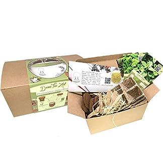 Geschenk-Anzuchtset-Bio-Tee-Kruter-Pflanzset-mit-3-Sorten-Kruter-Samen-wie-Grne-Minze-Salbei-und-Zitronenmelisse-Geschenk-Set-zu-jedem-Anlass-ideales-Tee-Geschenk-fr-Frauen-und-Mnner