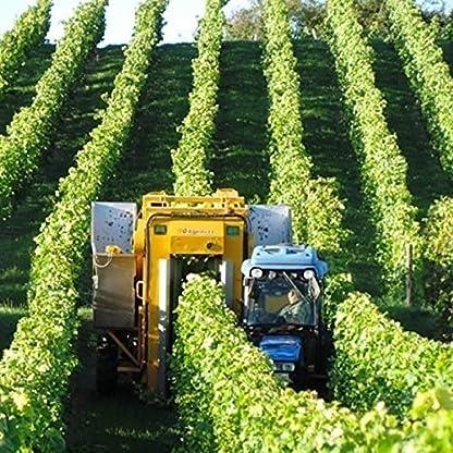 Weingut-Marco-W-Becker-Ros-Rheinhessen-Frhburgunder-Weiherbst-2012-lieblich-9-x-075l-VERSANDKOSTENFREI