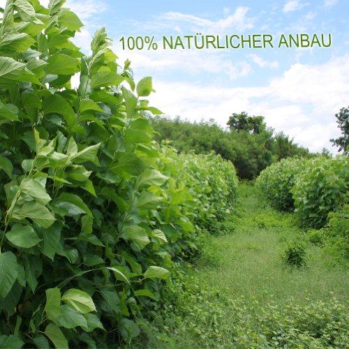 Maulbeerblätter Tee Organic 100g lose
