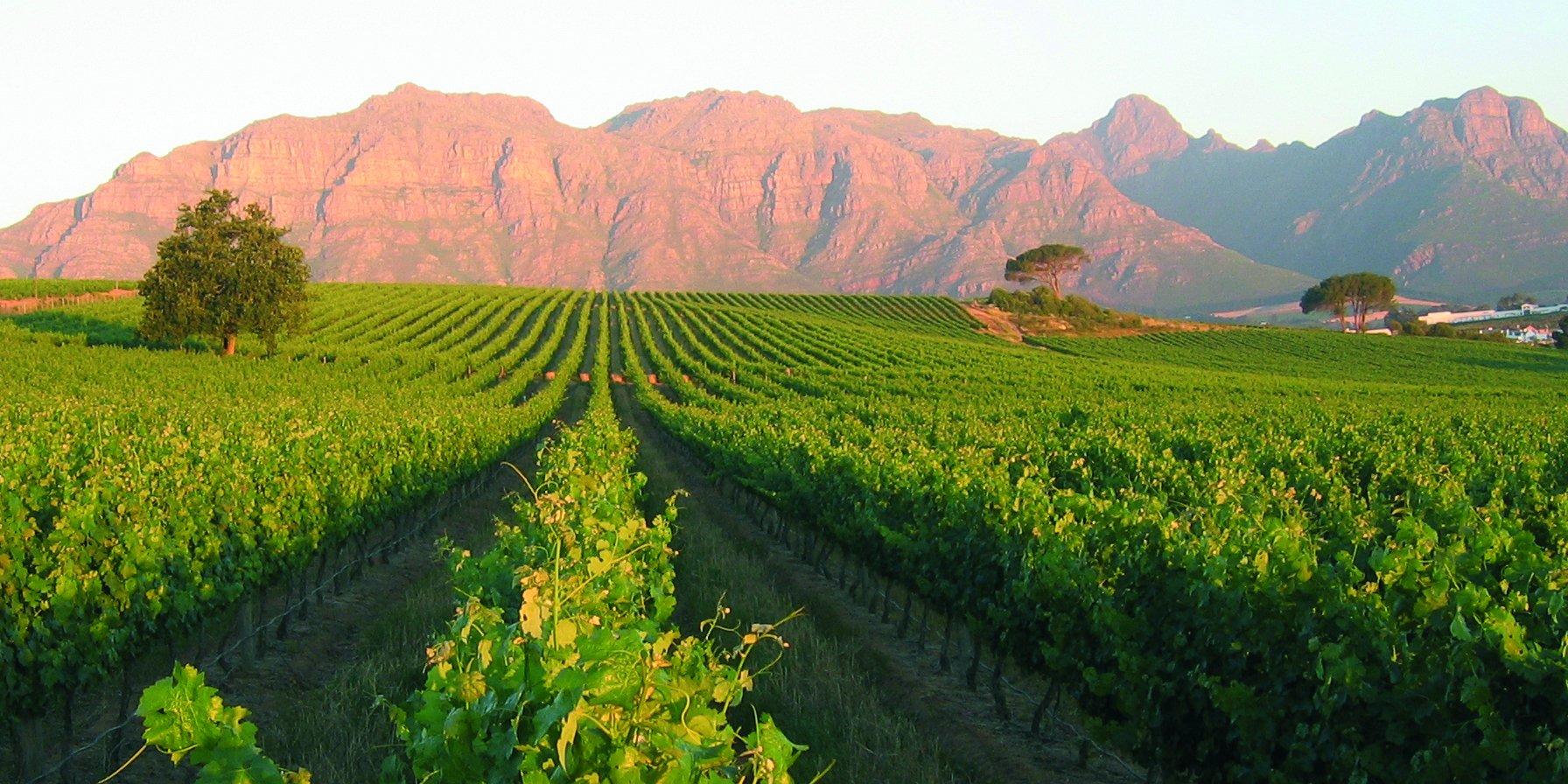 Kleine-Zalze-Cellar-Selection-Pinotage-Sdafrikanischer-Rotwein-Trocken-6-Flaschen–075L