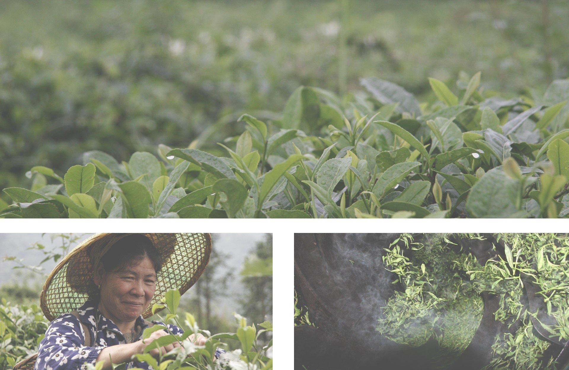 China-Dao-Ren-Feng-Superior-Green-100g-Bio-Tee