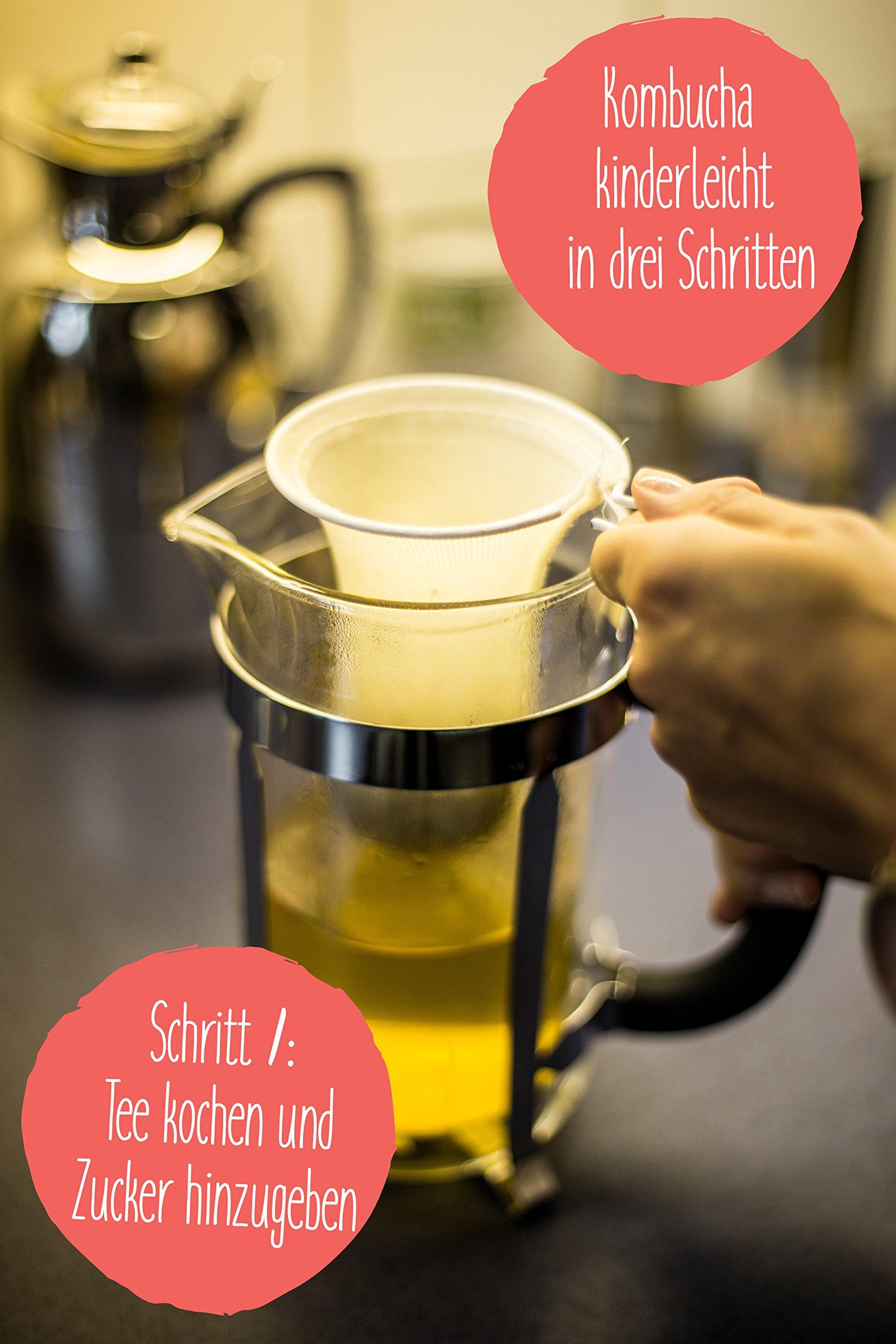 Original-Kombucha-Tee-Pilz-in-Premium-Gre-Besonders-Vitaler-Scoby-in-Bio-Qualitt-fr-1-5L-Mit-Kombucha-Getrnk-Anleitung-und-Erfolgsgarantie-von-Fairment-